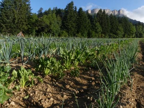 légumes plein champ