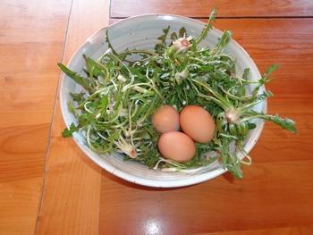 manger-de-saison-pissenlits